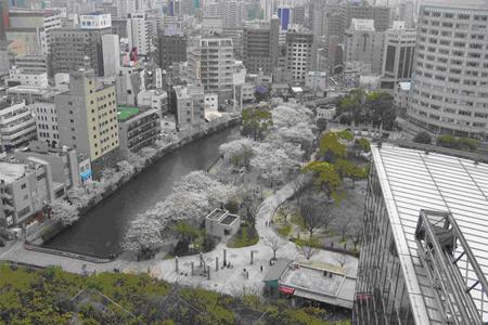 Du học Nhật Bản: Học viện Ngôn ngữ NISHINIHON