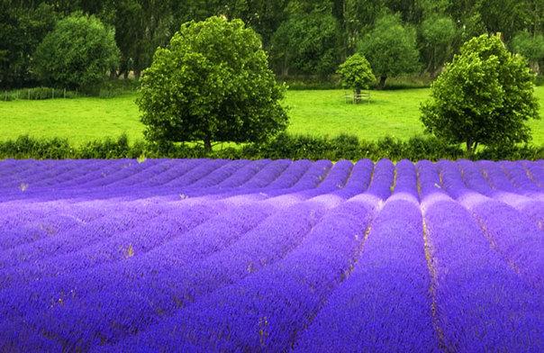 Du lịch Pháp với sắc tím tháng 6