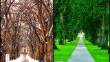Con đường vào trường tuyệt đẹp tại đại học Colorado State