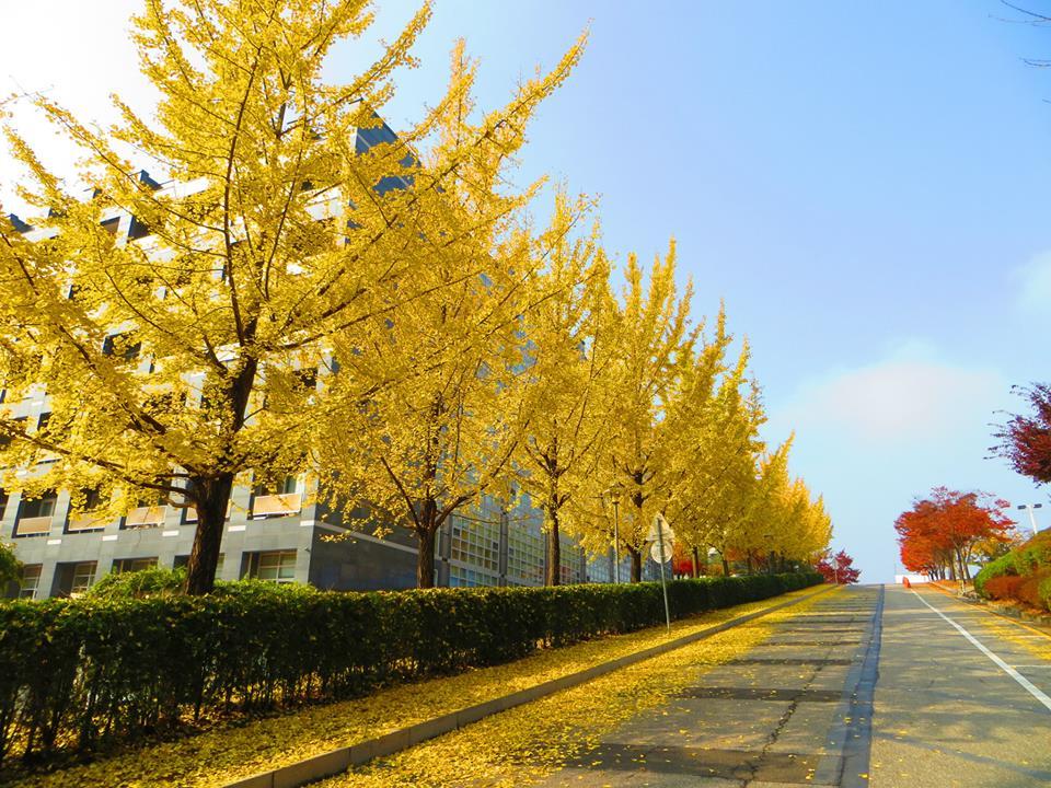 Khung cảnh tuyệt đẹp tại trường đại học Myongji
