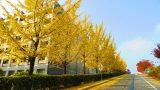 Mùa thu tại đại học Myongji thật là đẹp