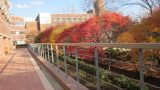 South Korea Duksung Woman's University Season Fall So beautiful