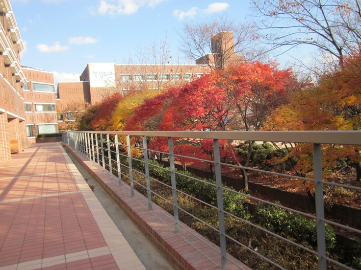 South Korea Duksung Woman's University Season Fall So beautiful