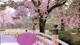 Cảnh đẹp tại Nhật Bản