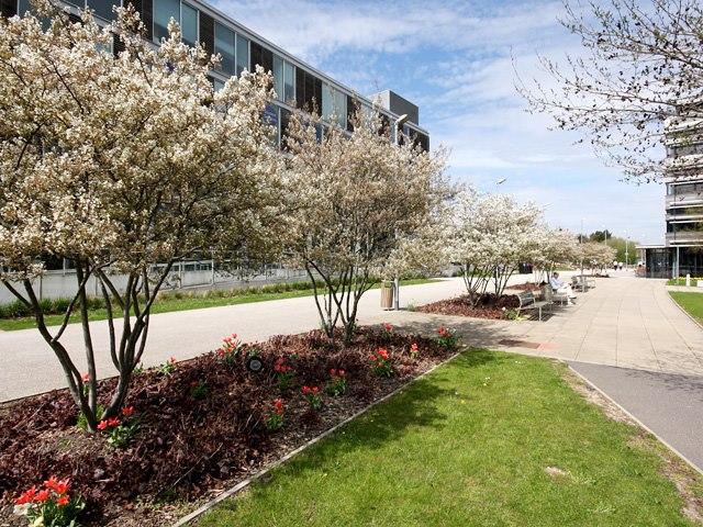 Khung cảnh mùa xuân tại trường đại học Anglia Ruskin
