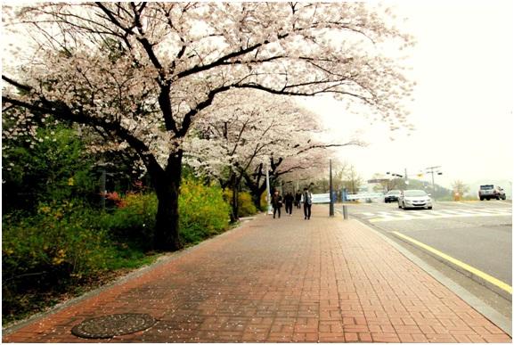 Đến với Seoul Hàn Quốc dưới góc nhìn du học sinh Việt