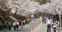 Nhận Visa thẳng du học Hàn 2018 với đại học Chungnam
