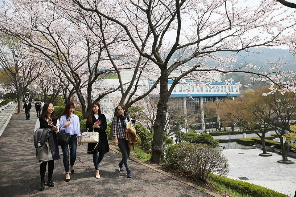 Tăng tốc việc du học Hàn Quốc tại buổi phỏng vấn trực tiếp với đại học Dong-A