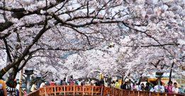 Tại sao lại chọn du học Hàn Quốc khi quyết định du học
