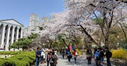 Du học hàn quốc ngành du lịch tại sao không?